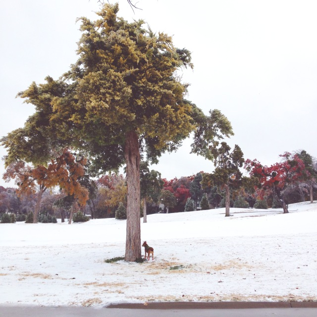 Big Tree, Little Dog.